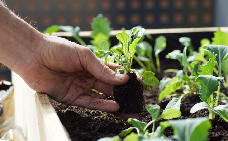 Hands planting seeds in a garden